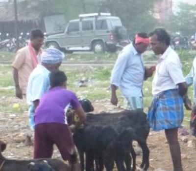 Marché aux chèvres